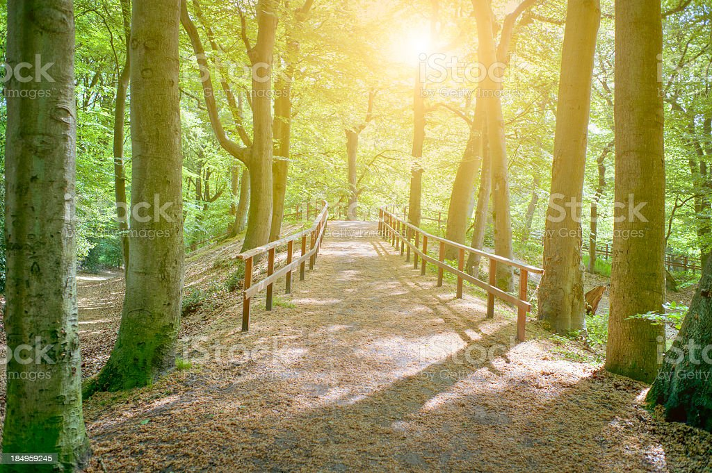 Dutch forest with fenced footpath and sun through trees stock photo