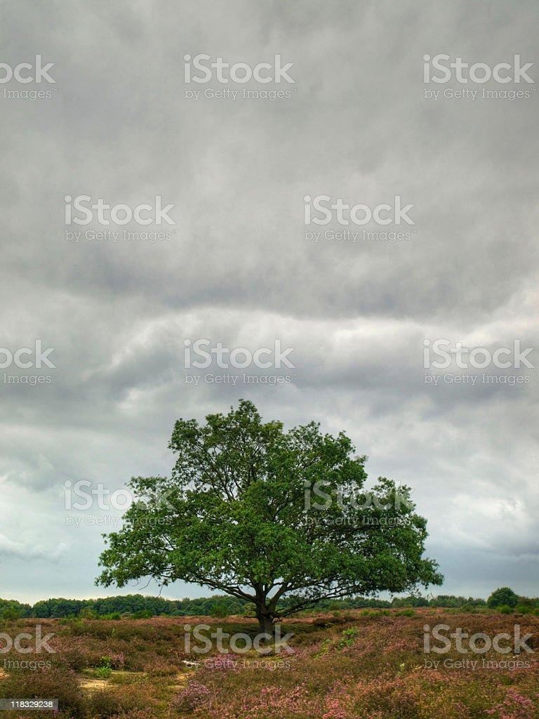 Dutch heath in HDR royalty-free stock photo