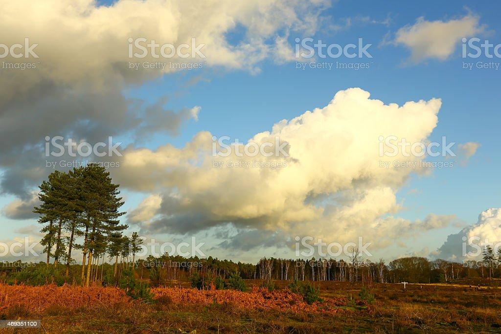 Dutch heathland stock photo