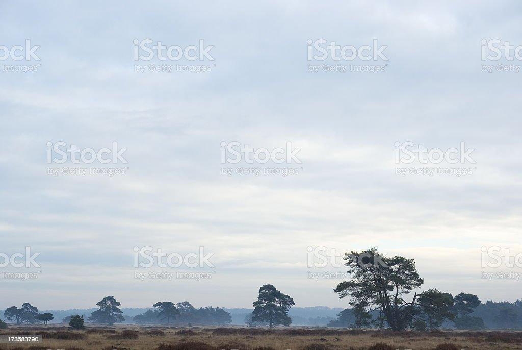 Dutch Landscape: Heath Land in Winter (Hoge Veluwe) stock photo