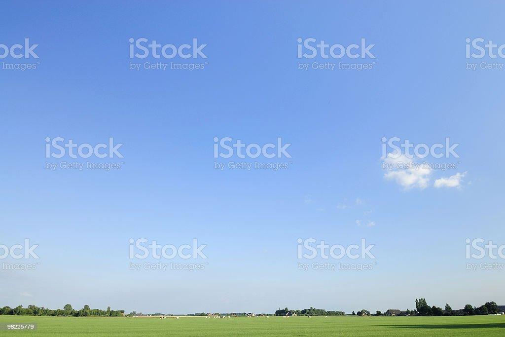 Dutch landscape in summer stock photo