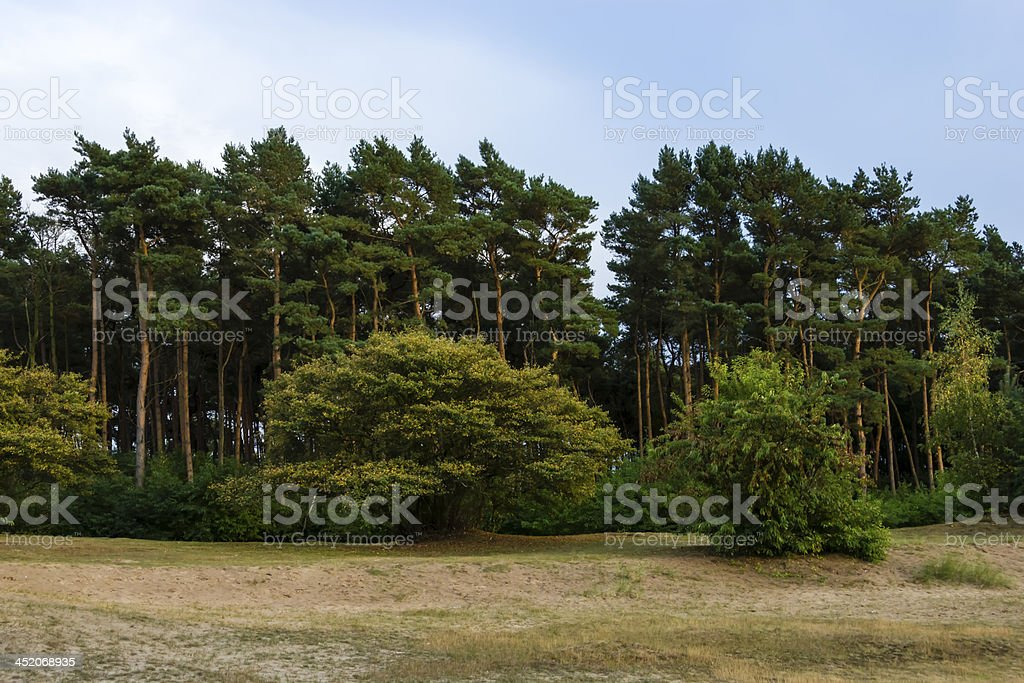 Dutch landscape in the evening royalty-free stock photo
