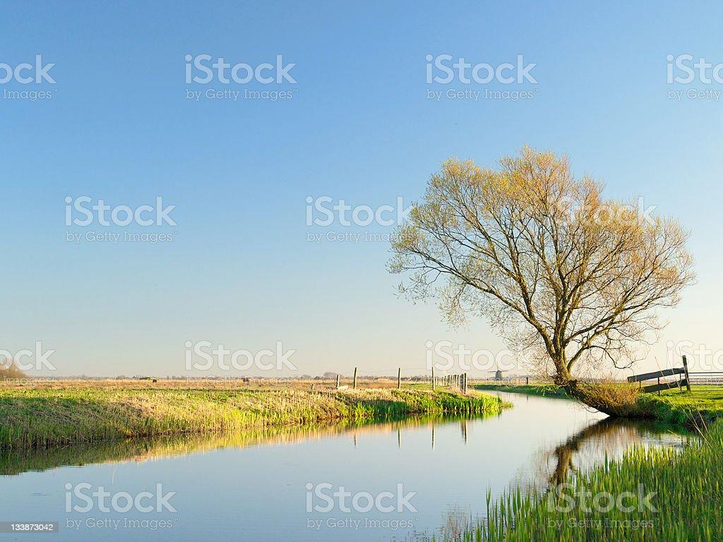 Dutch polder landscape in spring stock photo