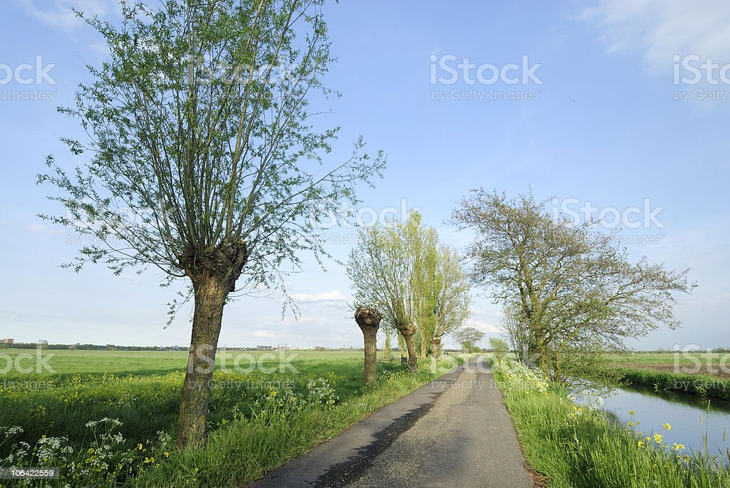 Dutch polder landscape with trees in early spring royalty-free stock photo