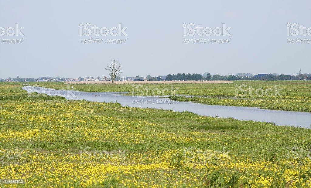 Dutch polder royalty-free stock photo