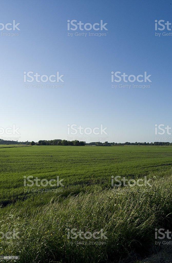 Dutch polder stock photo