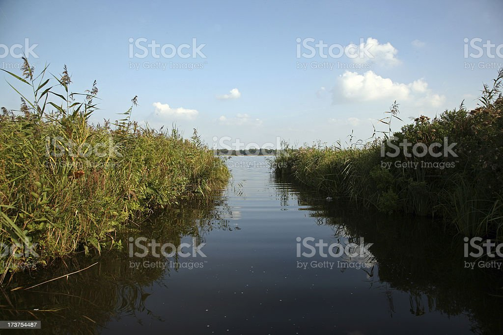 Dutch pond with lots of reed royalty-free stock photo