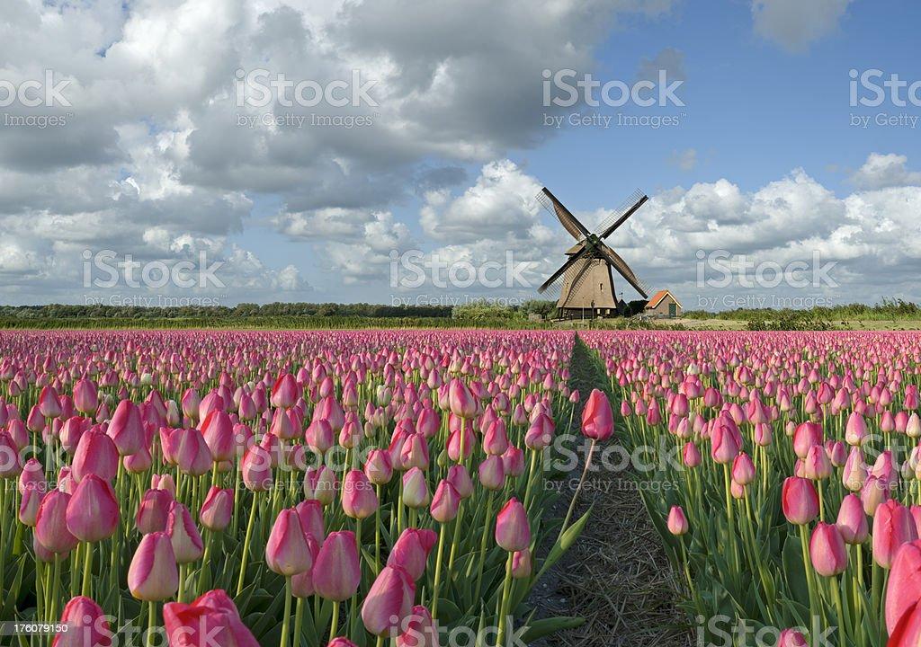 Dutch Spring Landscape royalty-free stock photo