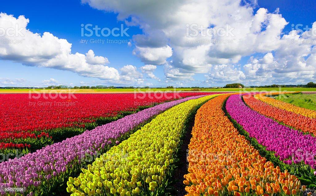 Dutch Spring Landscape stock photo