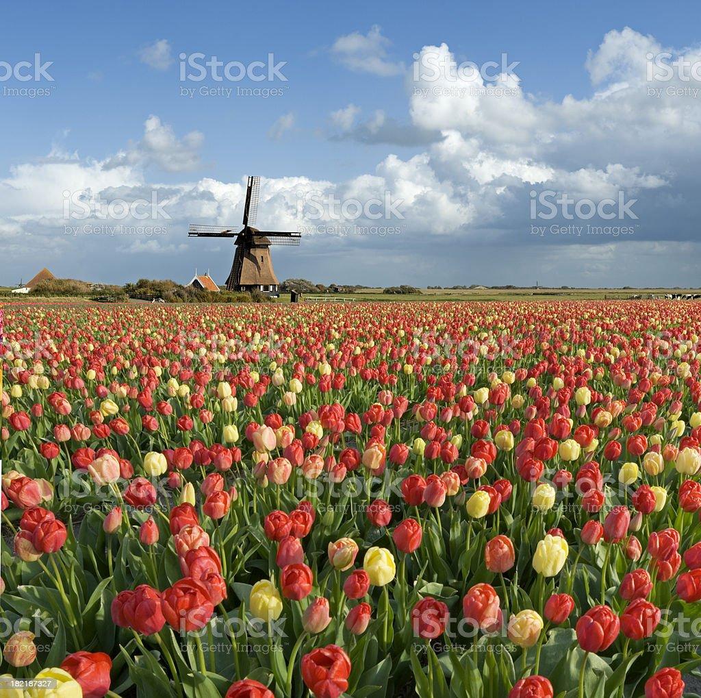 Dutch Spring Scene stock photo