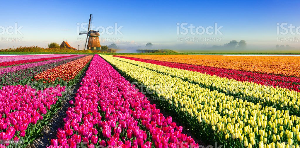 Dutch Spring Scene stock photo
