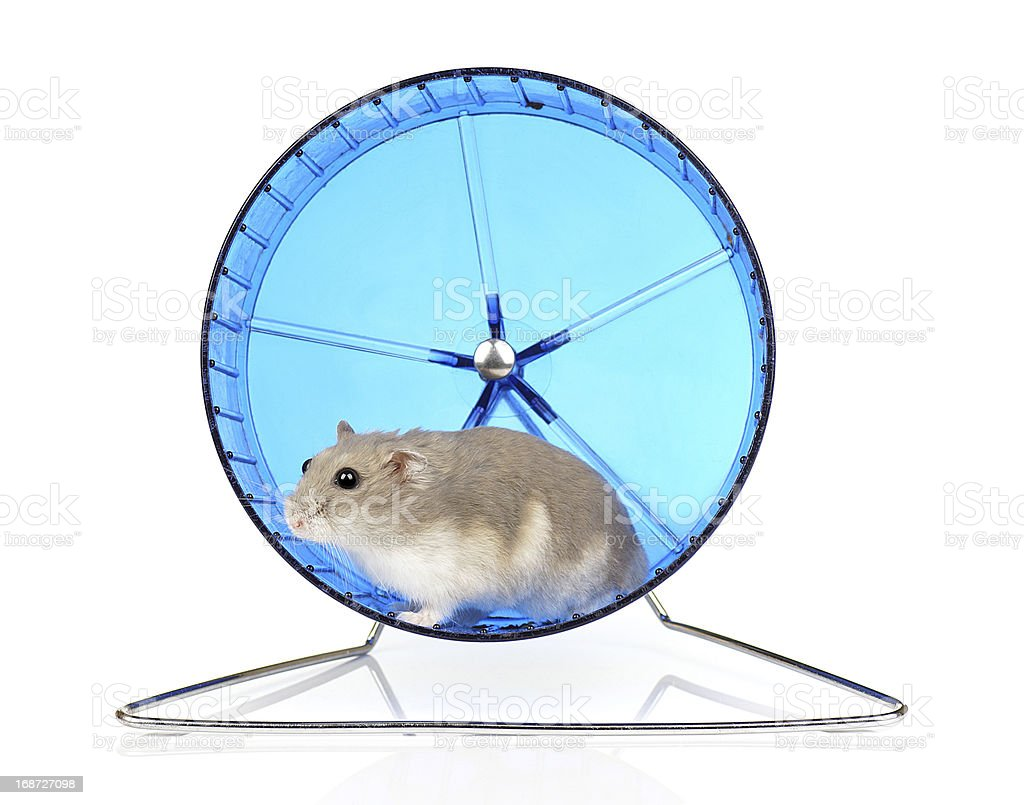 Dwarf Hamster royalty-free stock photo
