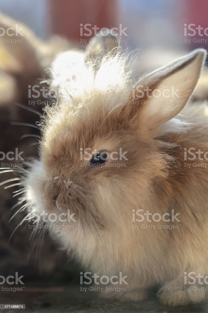 Dwarf rabbit.. stock photo