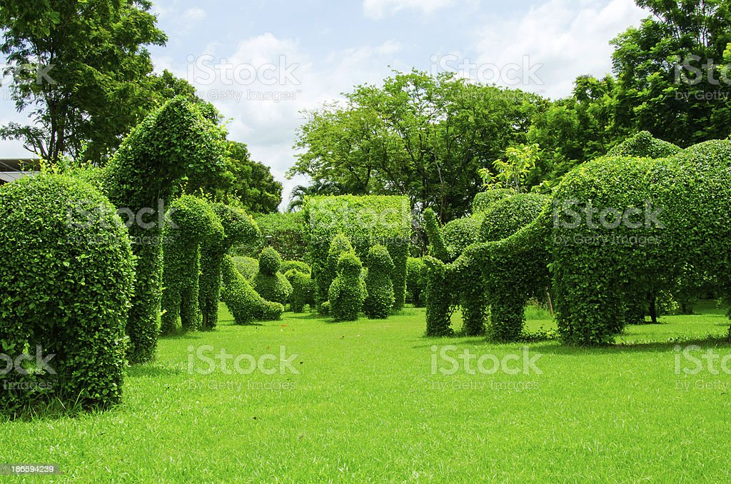 dwarf tree in the garden royalty-free stock photo