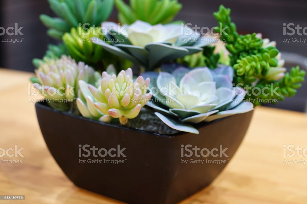 dwarf trees pot stock photo