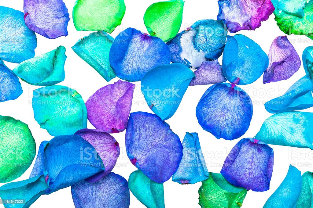 Dyed Rose Petals In Cool Colors royalty-free stock photo
