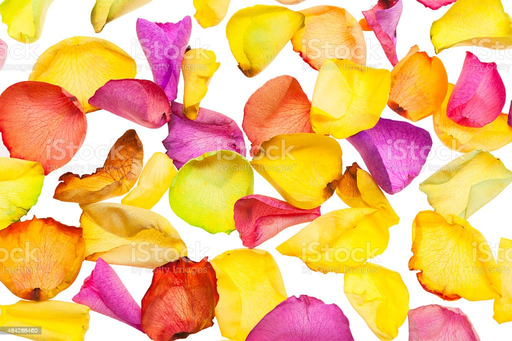 Dyed Rose Petals In Warm Colors royalty-free stock photo