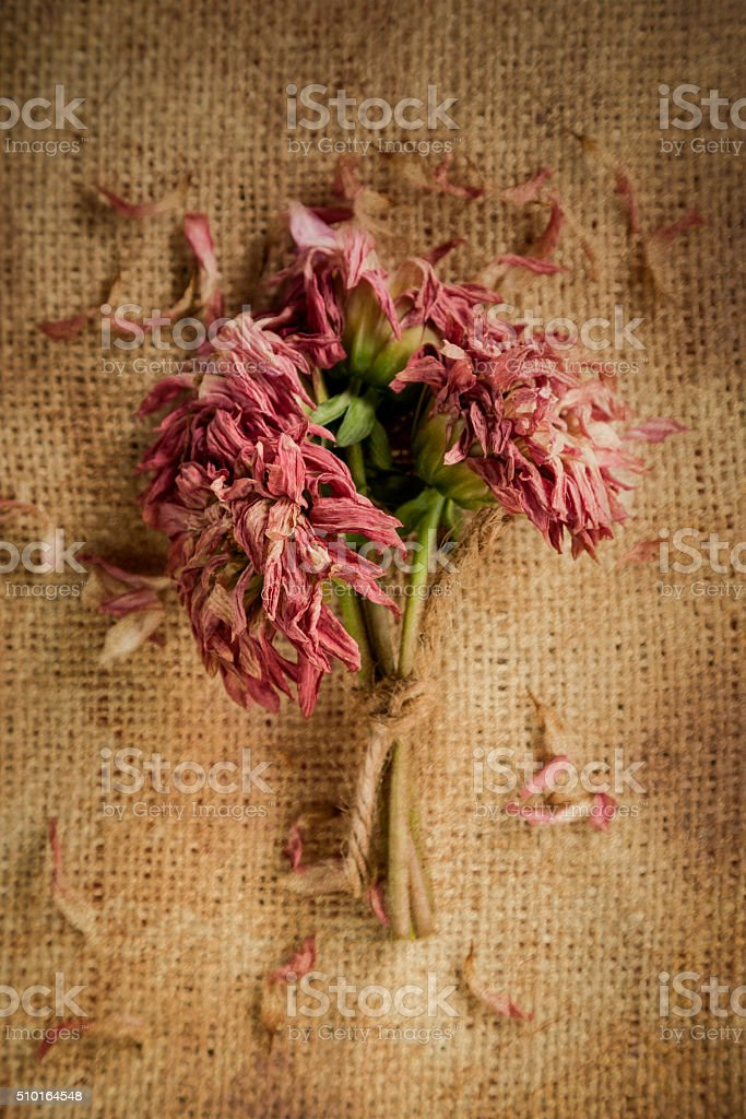 Dying Dahlia Bouquet stock photo
