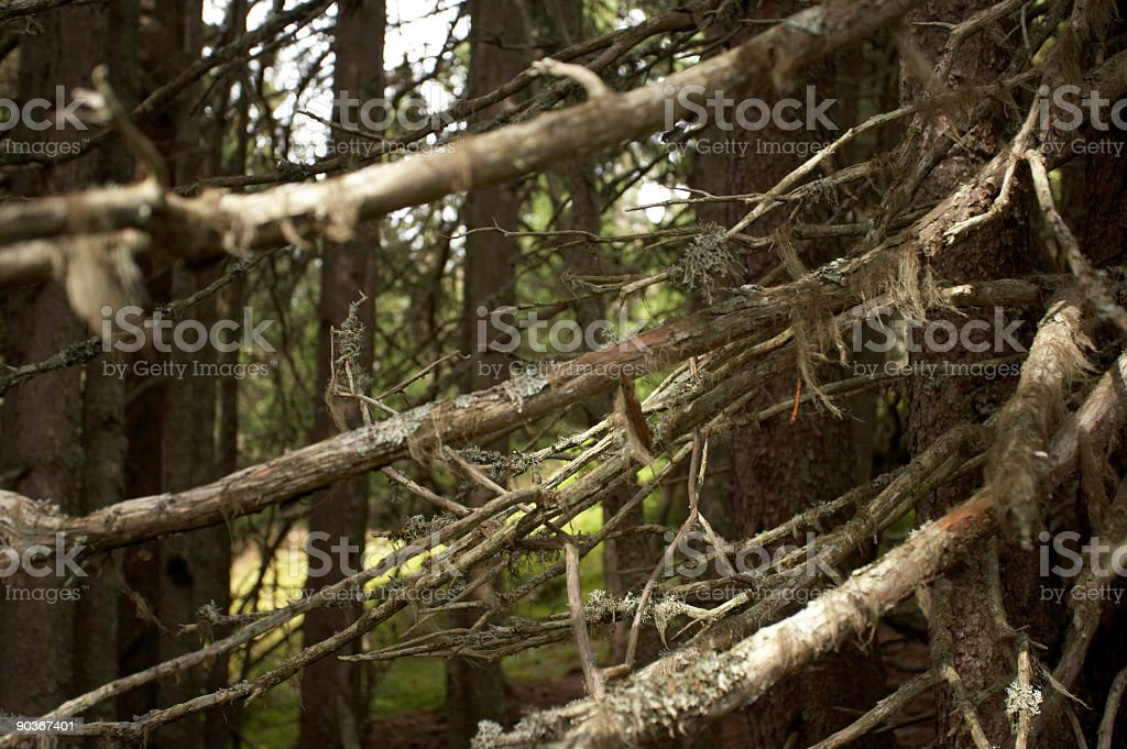 dying forest closeup stock photo