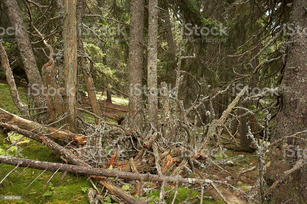 dying forest stock photo