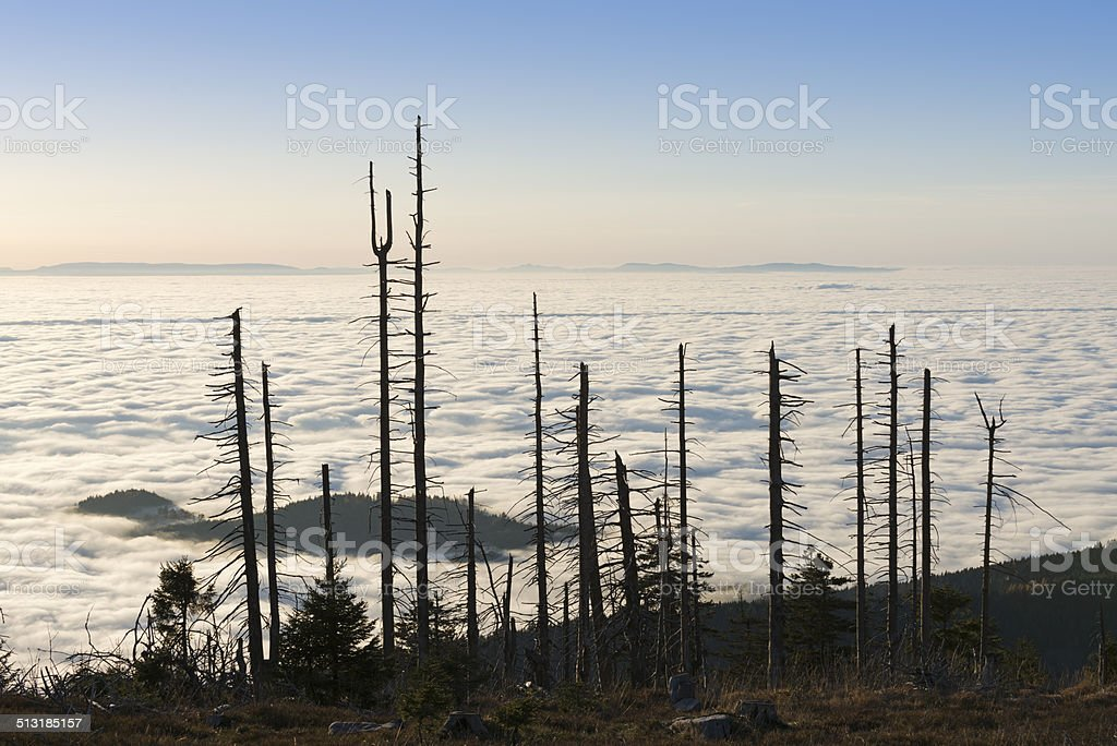 dying forest syndrome stock photo