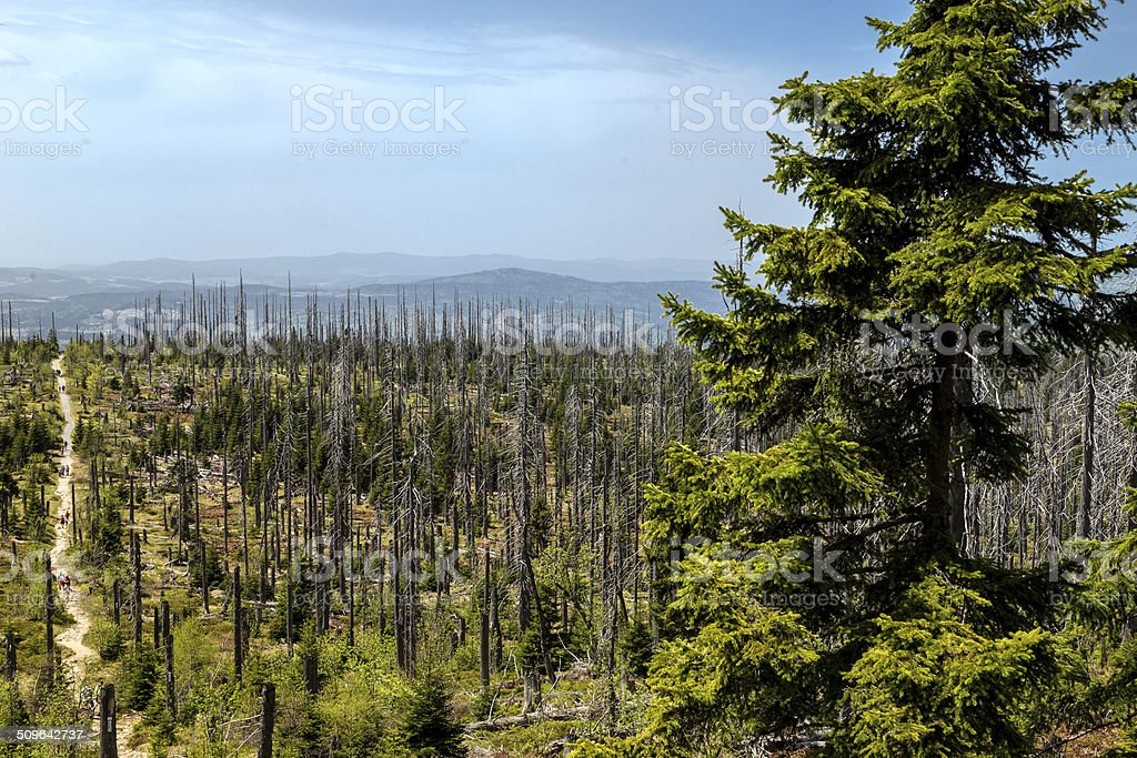 Dying forests stock photo