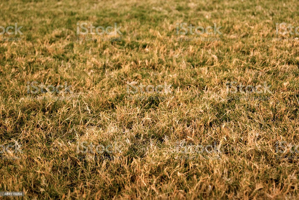 Dying Grass stock photo
