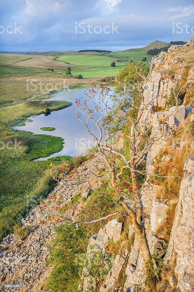 Dying rowan tree  Crag Lough Whin Sill  Hadrian's Wall Northumbe stock photo