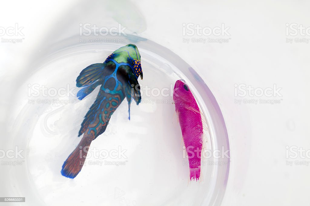 Dying saltwater fishes stock photo