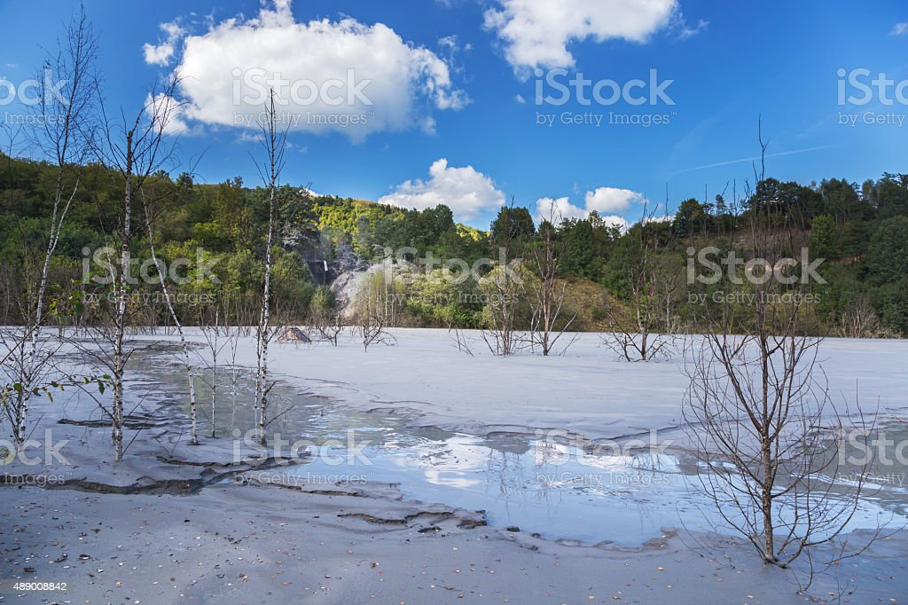 Dying trees of a tailings pond stock photo
