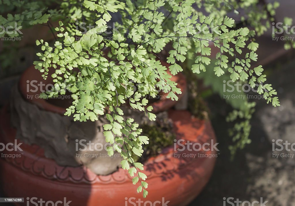 Dynamic fern leaves composition on water clay pot royalty-free stock photo