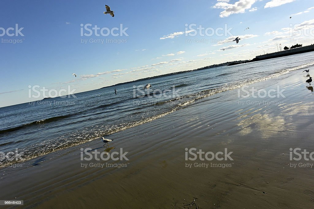 dynamic flock of sea gulls stock photo