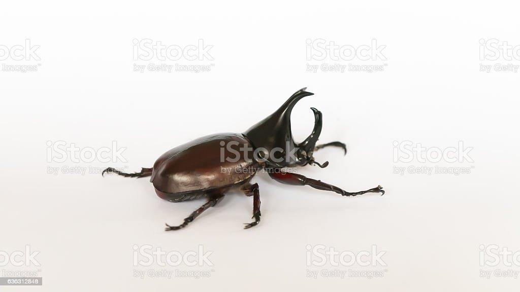 Dynastinae on isolated stock photo