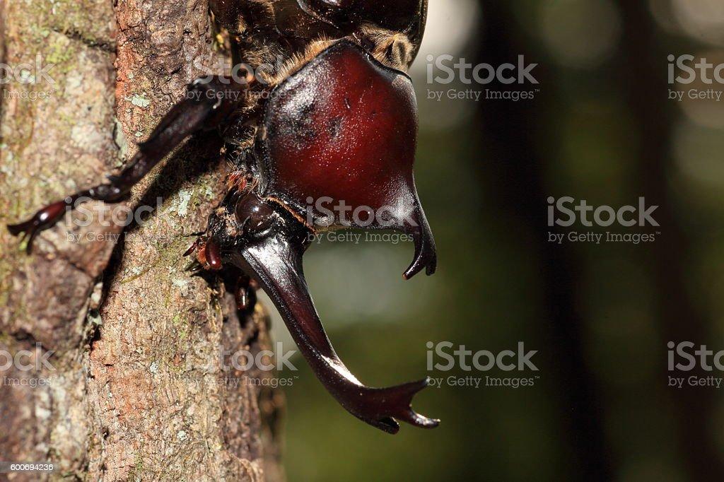 Dynastinae stock photo