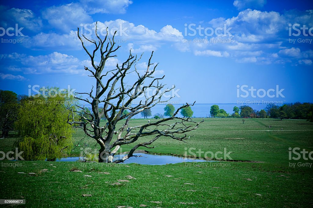 Dyrehaven - Denmark on a beautiful day in May. stock photo