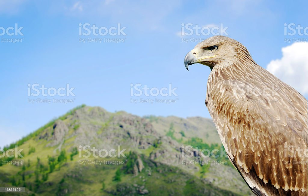 Eagle against the background of a mountain stock photo