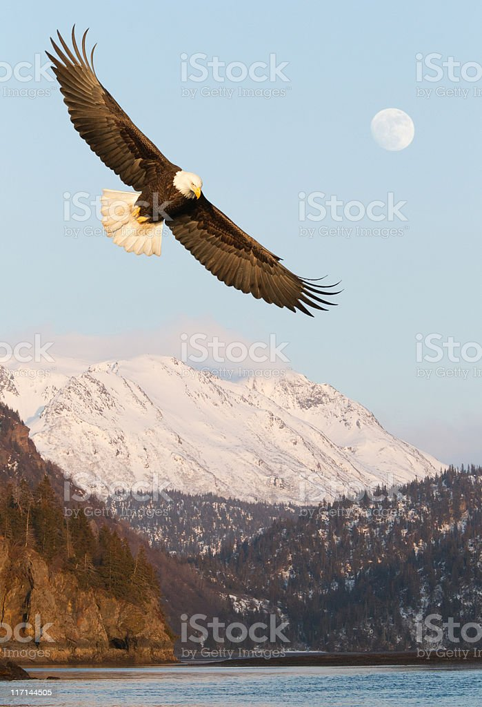 Eagle and Snow covered Mountains stock photo