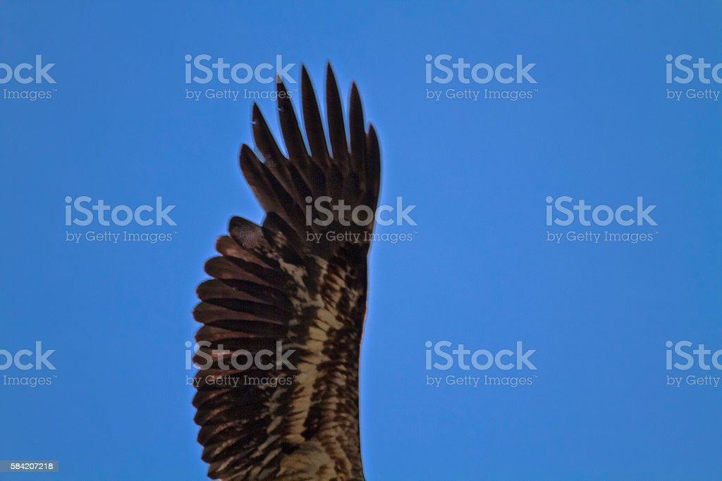 Eagle arm straight up in air stock photo