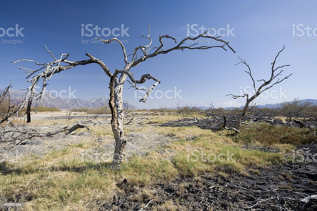 Eagle Borax Spring, Death Valley stock photo