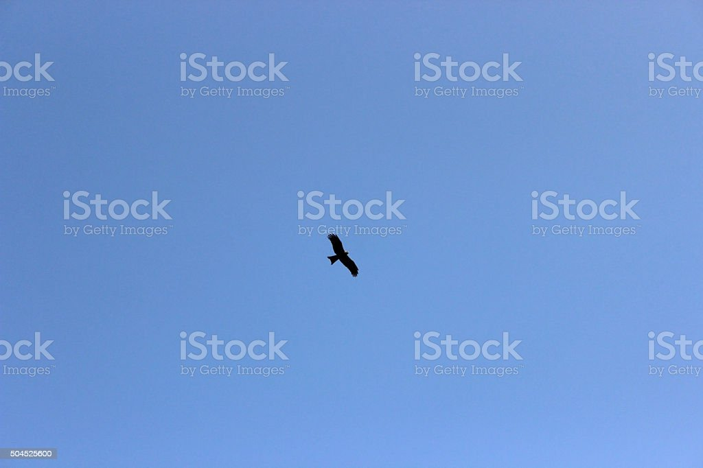 eagle flying in blue sky stock photo