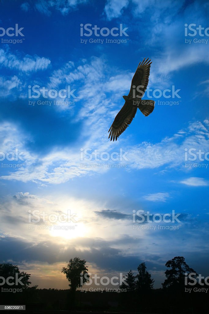eagle flying in cloudy sky stock photo