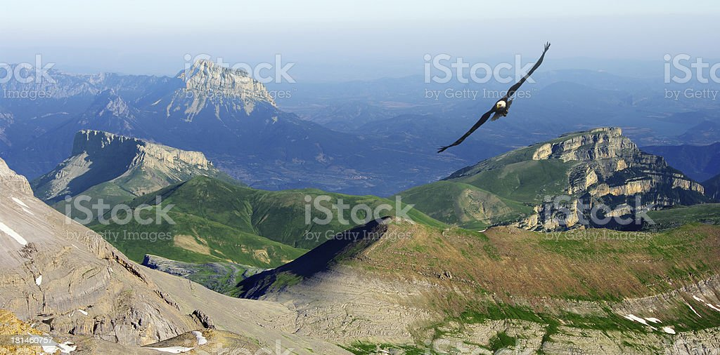 eagle flying in the Pyrenees stock photo