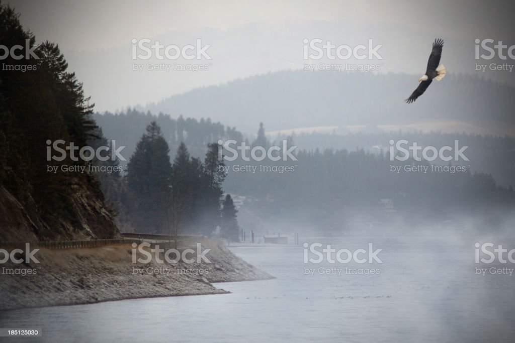 Eagle Flying over Lake. stock photo