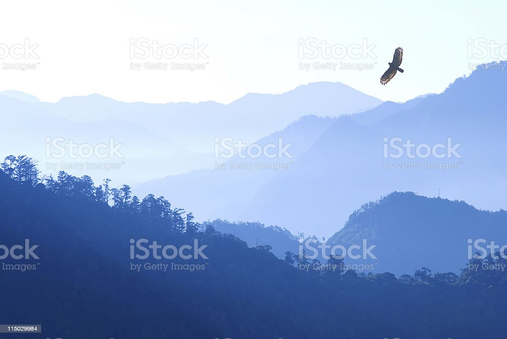Eagle flying over mist mountains in the morning royalty-free stock photo