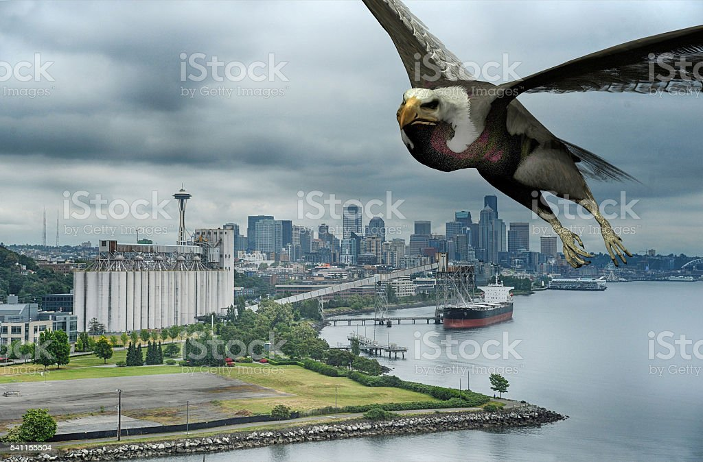eagle flying over Seattle stock photo