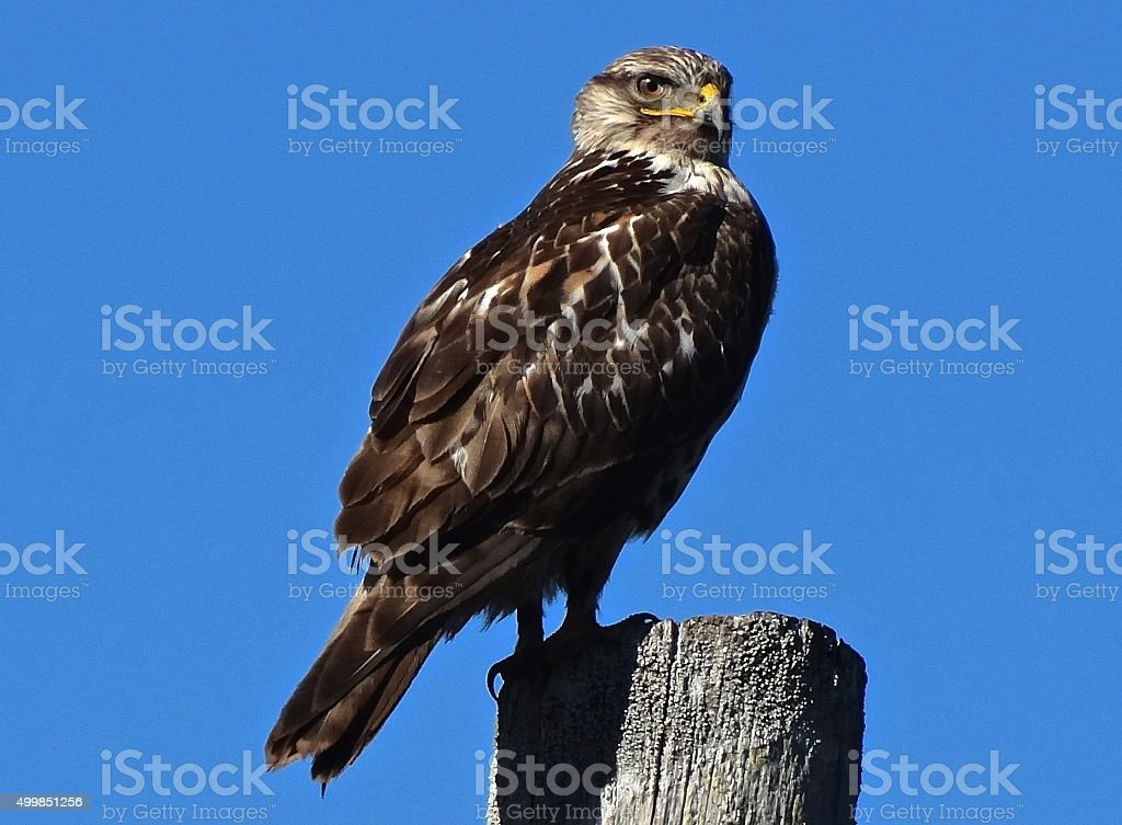 Eagle Hawk Eye stock photo