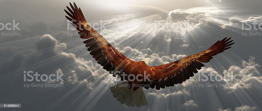 Eagle in flight above the clouds stock photo