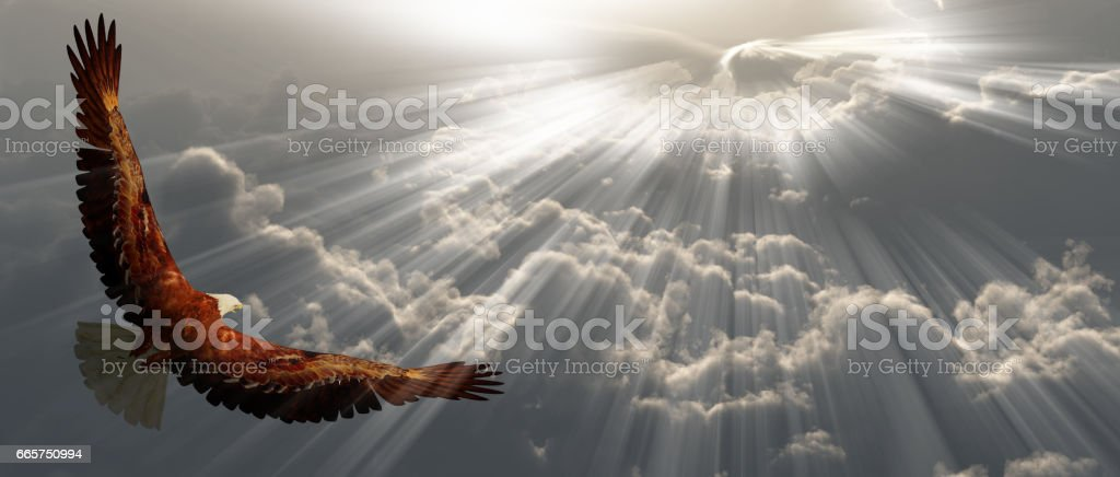 Eagle in flight above tyhe clouds stock photo