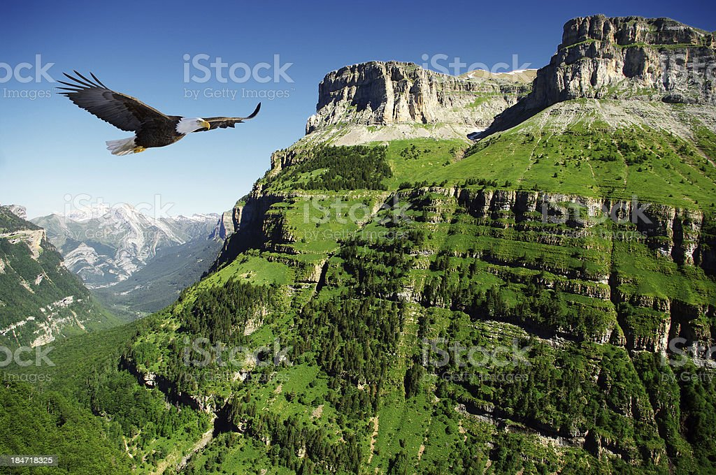 eagle in Ordessa Valley stock photo