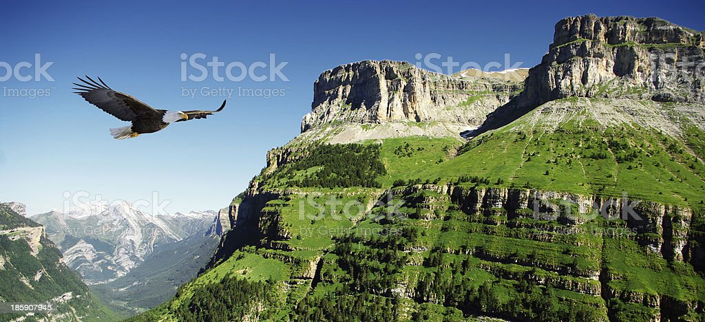 eagle in Ordessa Valley stock photo